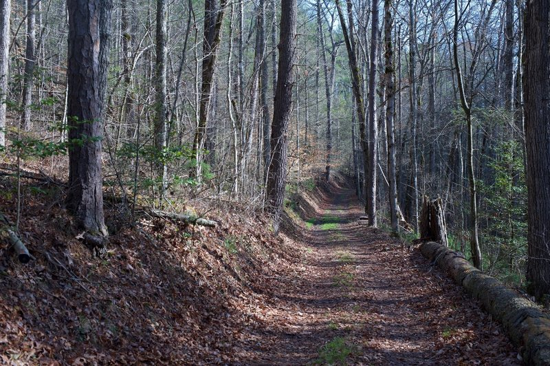 The Cooper Road Trail as it climbs up a gentle rise.