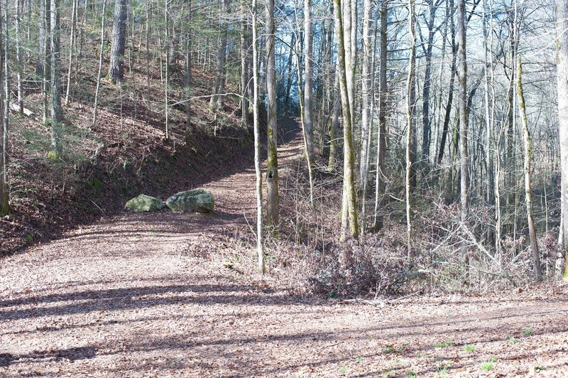 The Cooper Road Trail breaks off to the right and climbs the hill seen here while the Cane Creek Trail goes straight ahead.