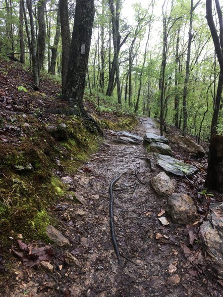 Pretty characteristic of the trail with a great tread, good markings, and lots of rock to hold everything together