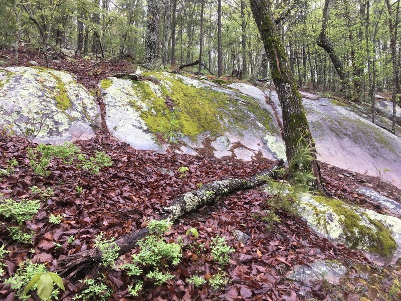 Lots of really cool boulders and moss.