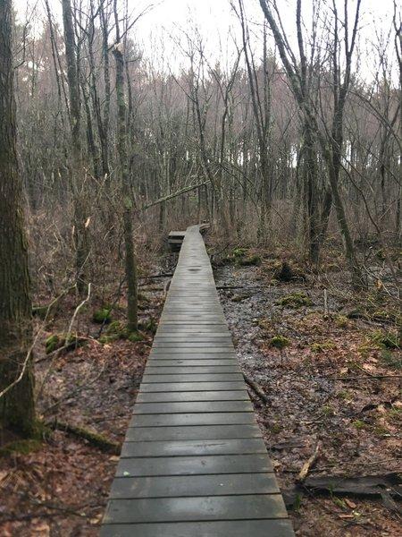 Boardwalks take you across the wetlands