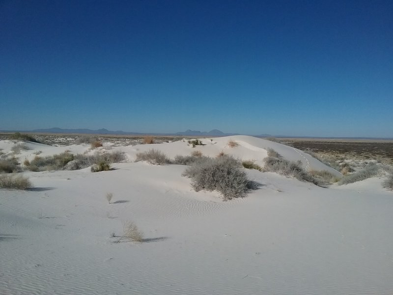 Looking west from the dunes