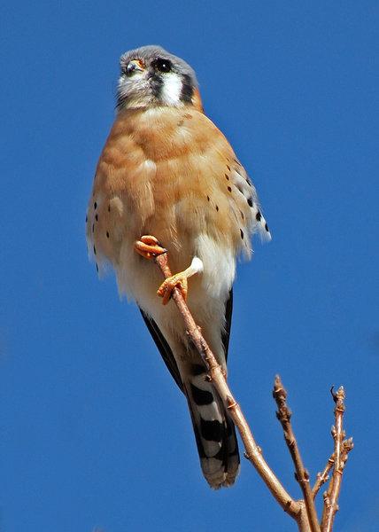 Montrose Bird Sanctuary (The Magic Hedge) Hiking Trail