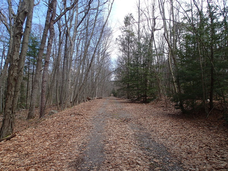 Red Maple Trail follows a forest road part of the way
