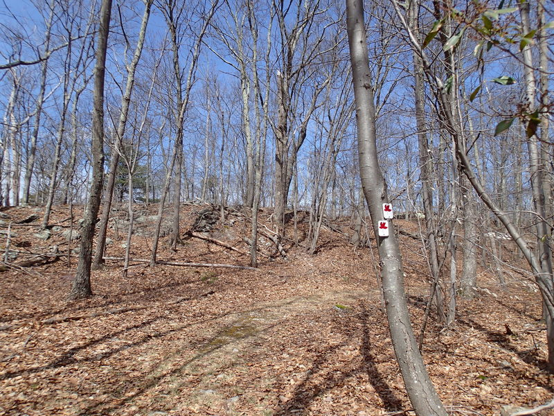 Red Maple Trail