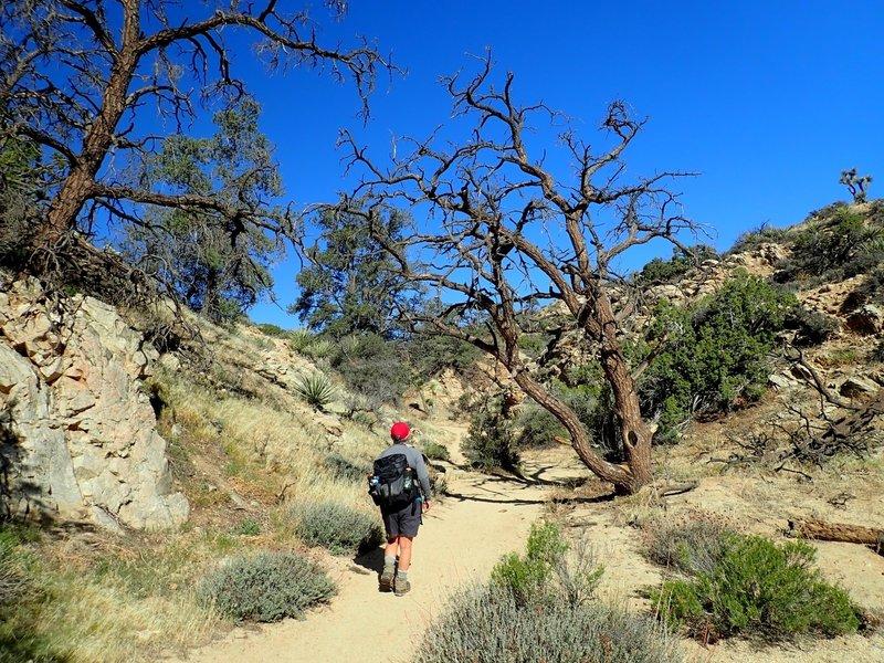 Along the trail to Warren Peak