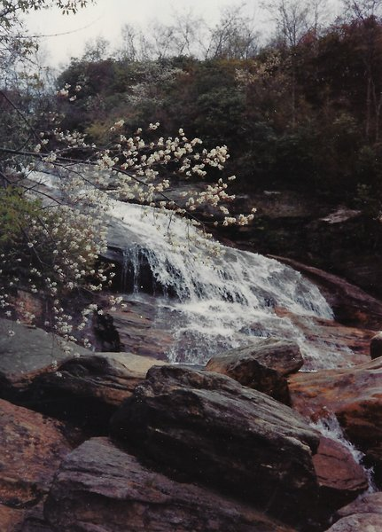 View of the falls in early spring. Service berry in bloom.