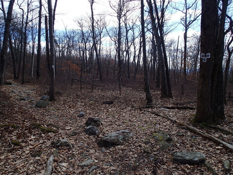 Jacobs Ladder Trail and Appalachian Trail junction