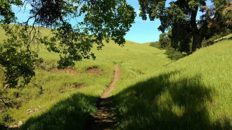A bit of shade at a seasonal stream in the sunny grass hills that Townsprings Trail travels through.