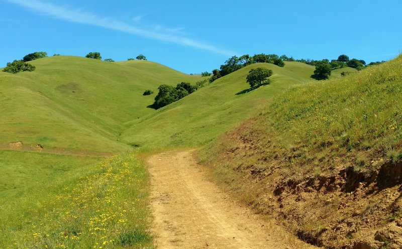 The green hills and wildflowers along Rancho San Ysidro Trail in late April.