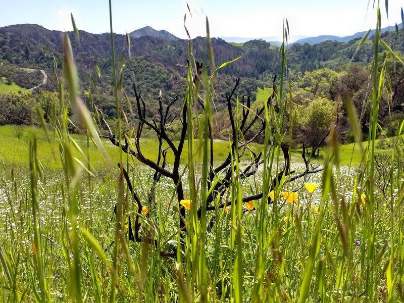 Vista Trail green in springtime (April 2018)