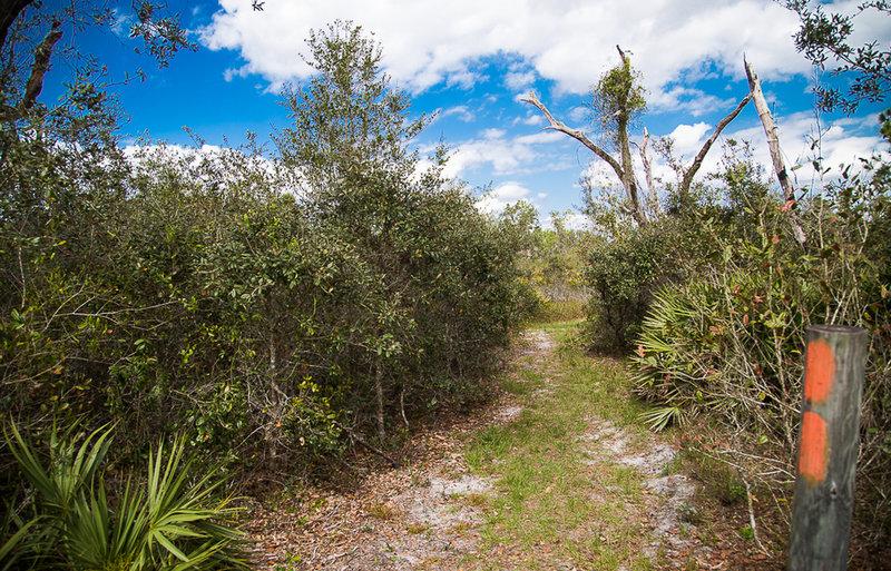 Follow the orange blazes through Florida Scrub Jay habitat and beautiful open views.