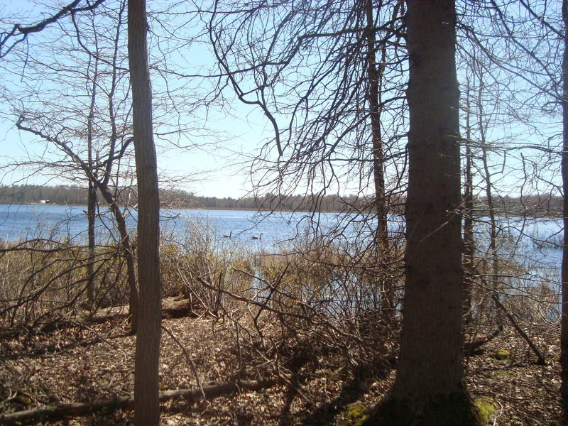 Late April viewing between the trees at Crooked Lake at a pair of Canada Geese.