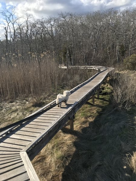 Second Boardwalk