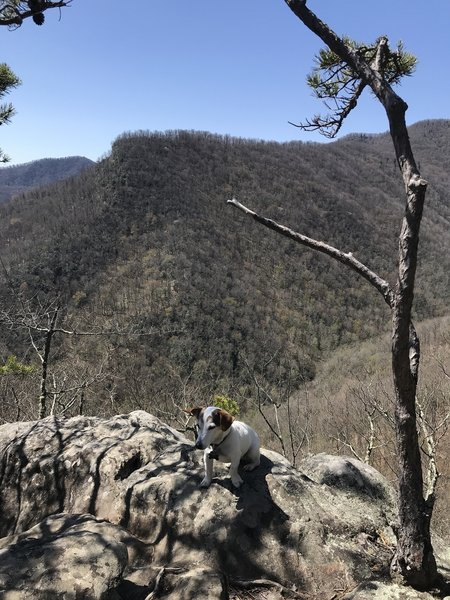 Viewpoint off Old Butt Knob Trail