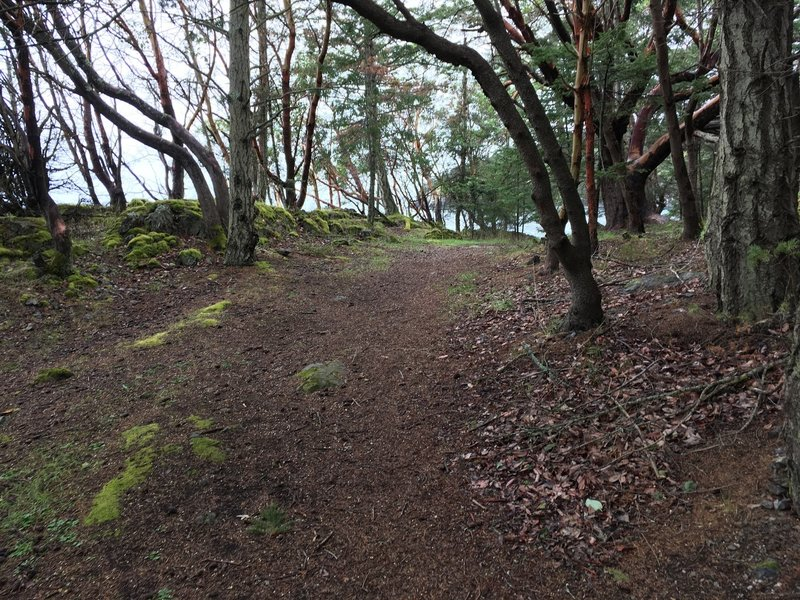 As you can see the trail is lined with madronas.