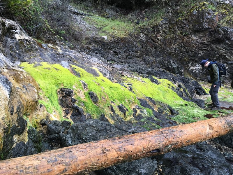 The limestone has an interesting effect on the local moss.