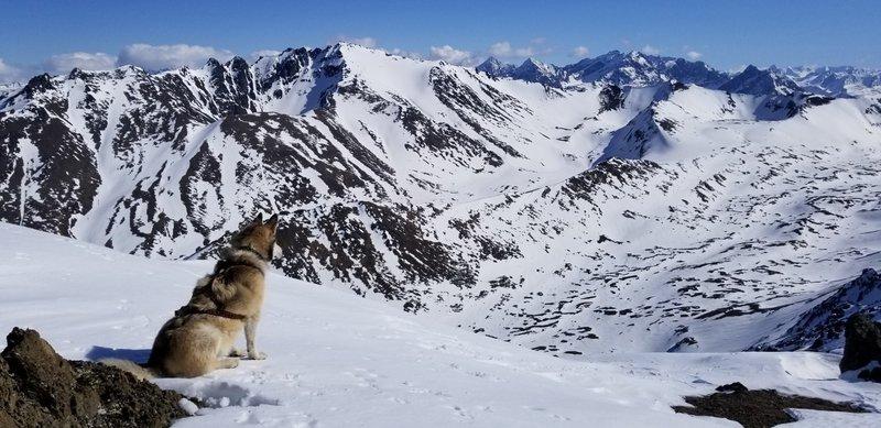 Knoya summit view looking east northeast toward Temptation Peak (and a malamute)
