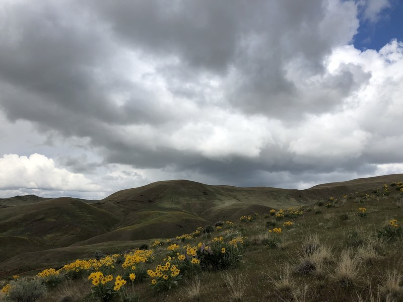 More beautiful flowers along the hillside.