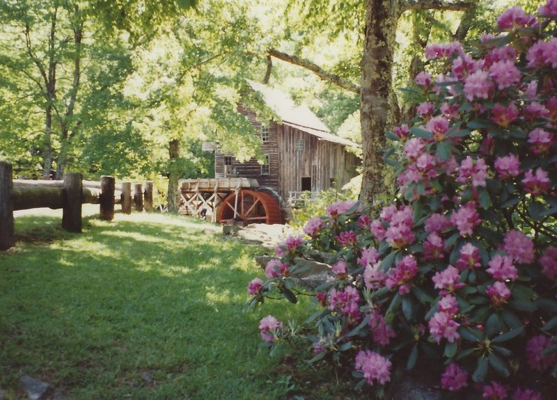 Glade Creek Grist Mill and Rhododendrons