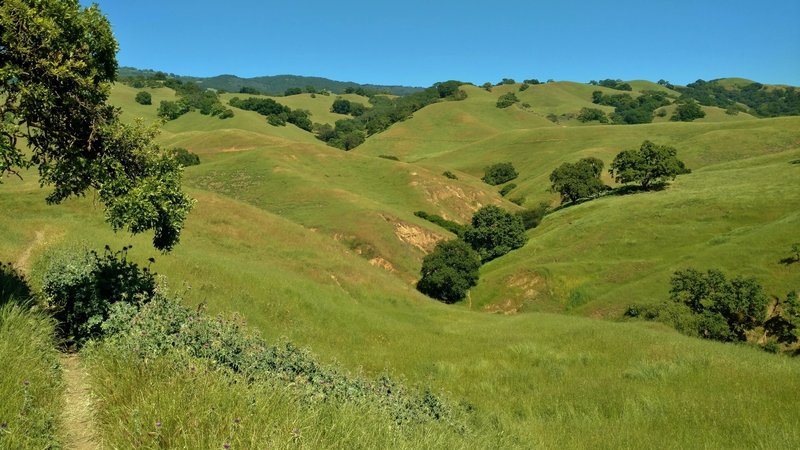 The grass hills in early May, that Savannah Trail meanders through. Many of the valleys are cut by seasonal streams over the years.