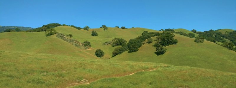 The green, oak studded grass hills of Coyote Lake - Harvey Bear Ranch County Park in early May, with Gaviota Trail winding through them.
