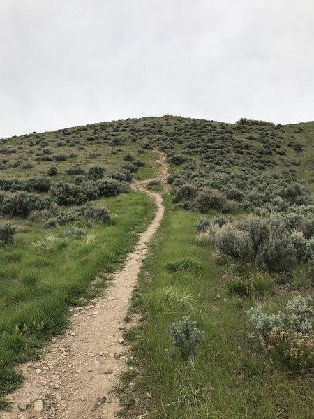 Starting the ridge