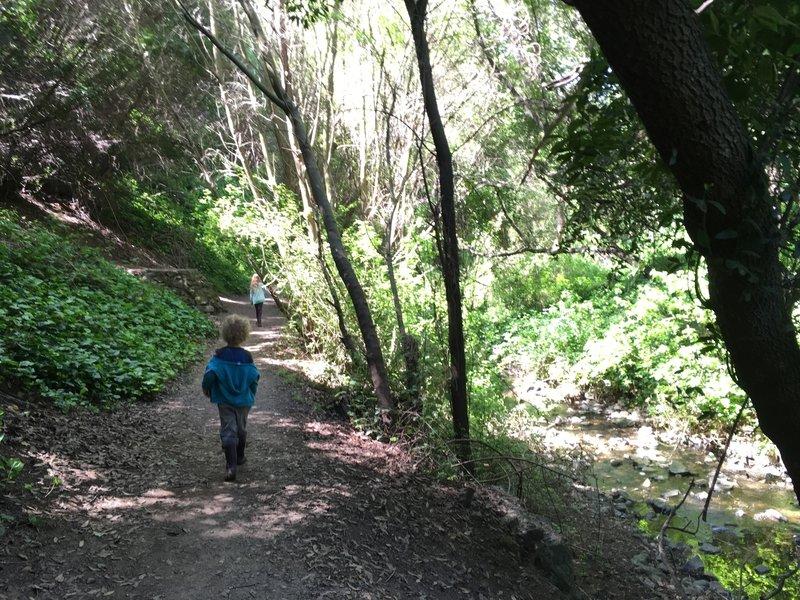 Walking along Sausal Creek on the Dimond Canyon Trail