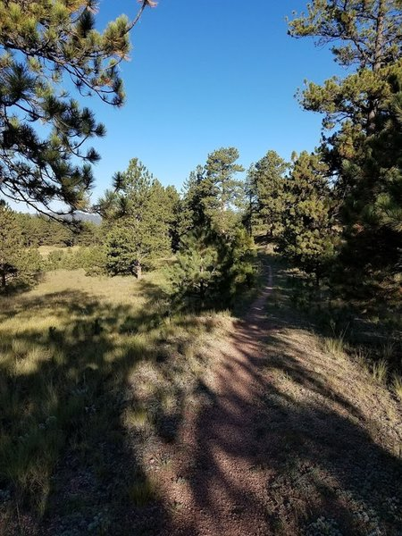 Near the trailhead, heading towards Florissant Fossil Beds
