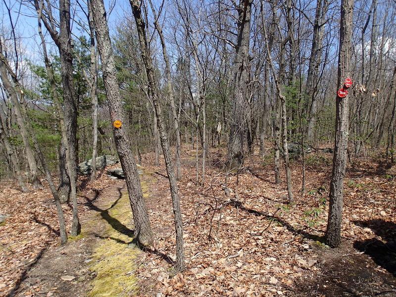 Lenape Ridge and Minisink Trail junction