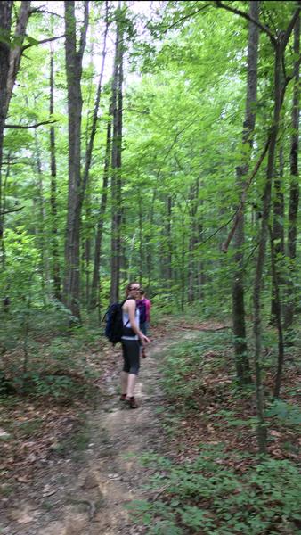 Decent path on Telegraph Trail