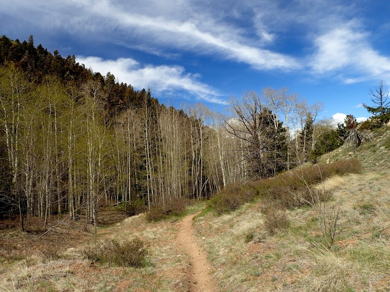 Aspens and a meadow along the trail