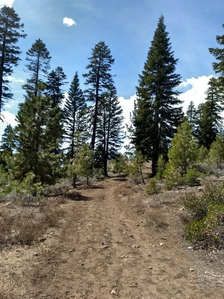 Easygoing wide trail
