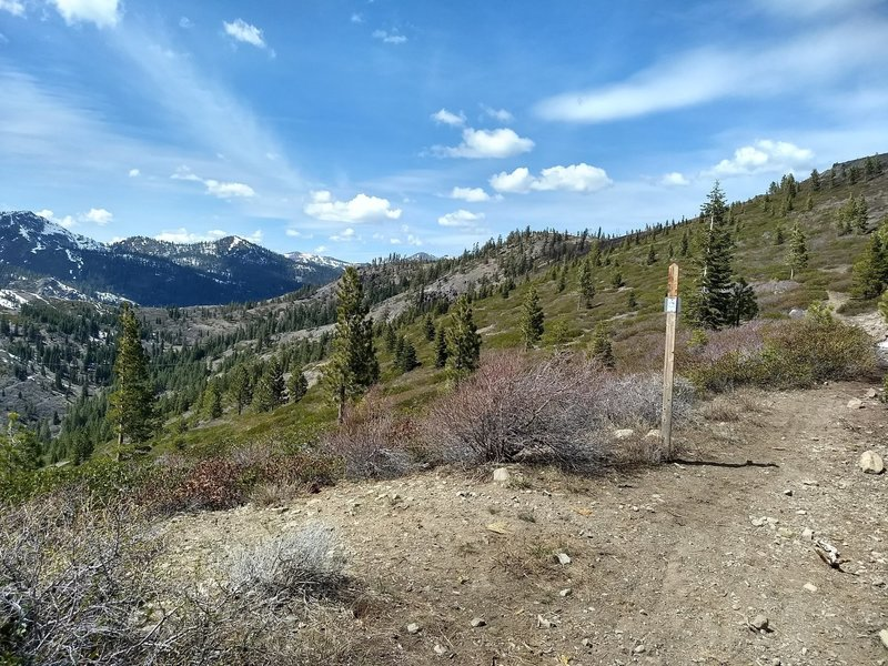 The trail continues onto the Donner Lake Rim trail (or just turn around like we did)