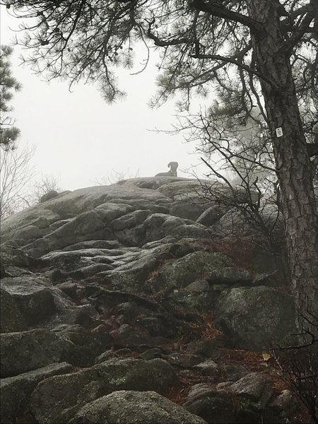 Even on a foggy day, the hike itself is worth it!