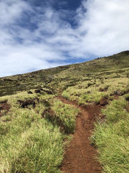 One of the smoother portions of the trail, heading up from east to west.