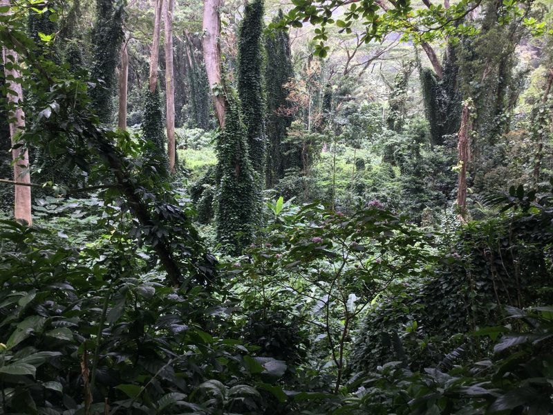 Looking through the amazing rainforest