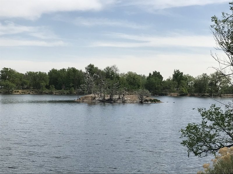 Lake birds nesting