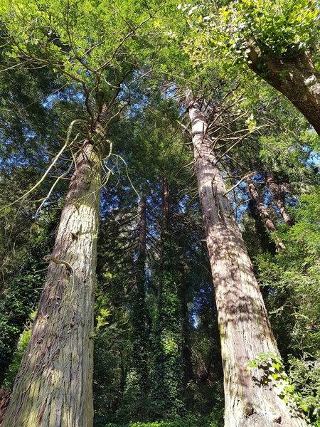 Time to hug a redwood