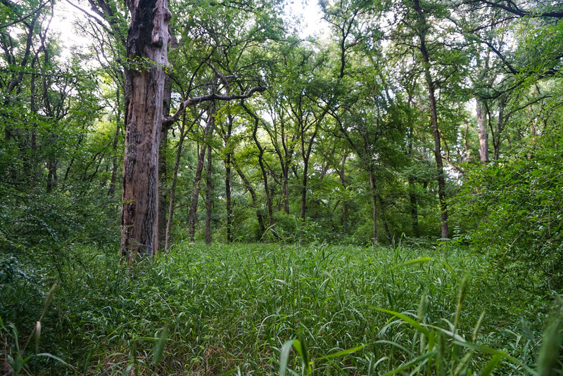 Some areas of this picturesque trail substitute heavy underbrush for a blanket of green grass.