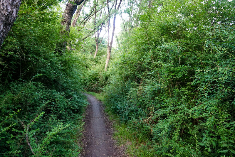 This section of the trail has very thick underbrush and lots of blind corners, so keep your ears open for cycling traffic.