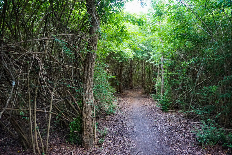 This portion of the trail is literally tunneled into the thick forest vegatation.