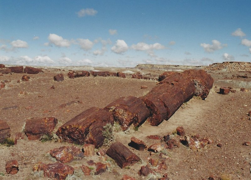 View of the petrified logs