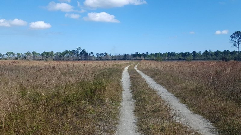 Quail Trail is an old road through the wetlands.