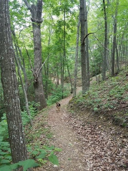 Lake Loop Trail after boat ramp area
