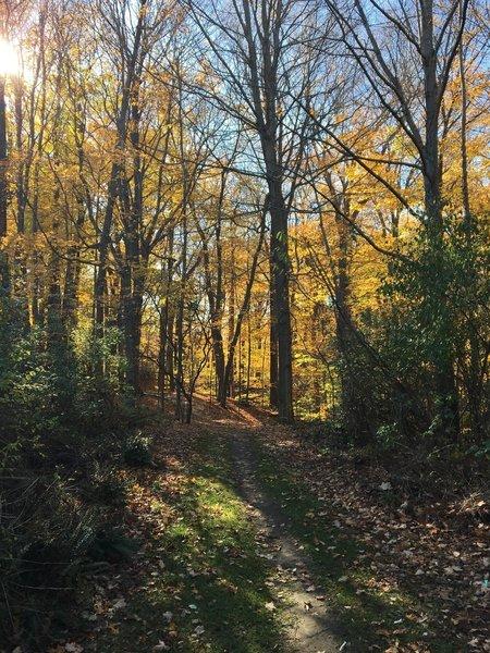 Orange Trail in the Fall