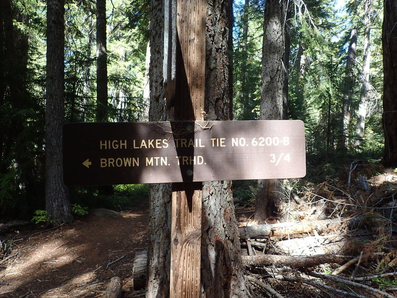 Where the Tie Trail meets the Brown Mountain Trail