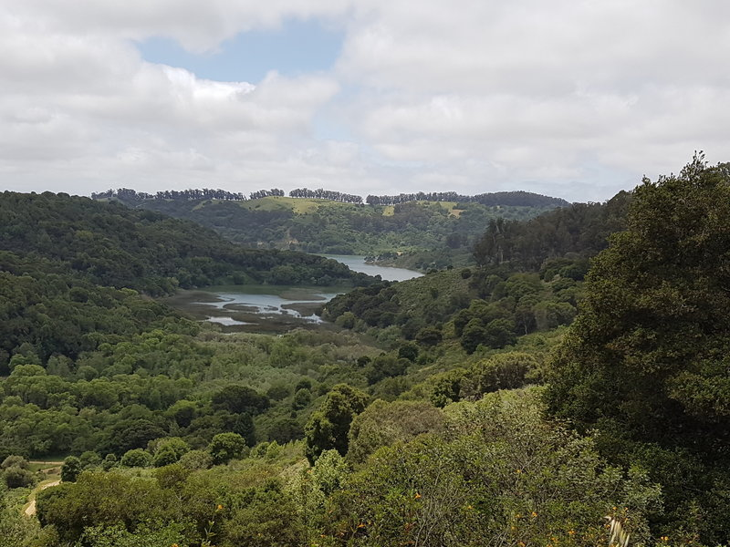 View of Honker Bay from the Live Oak Trail