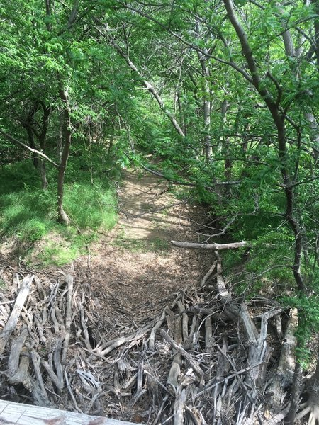 A dry creek with drift wood piled up against a bridge.
