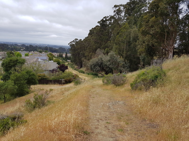Connector trail between Don Castro and Five Canyons